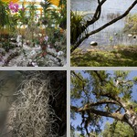 Air Plants photographs