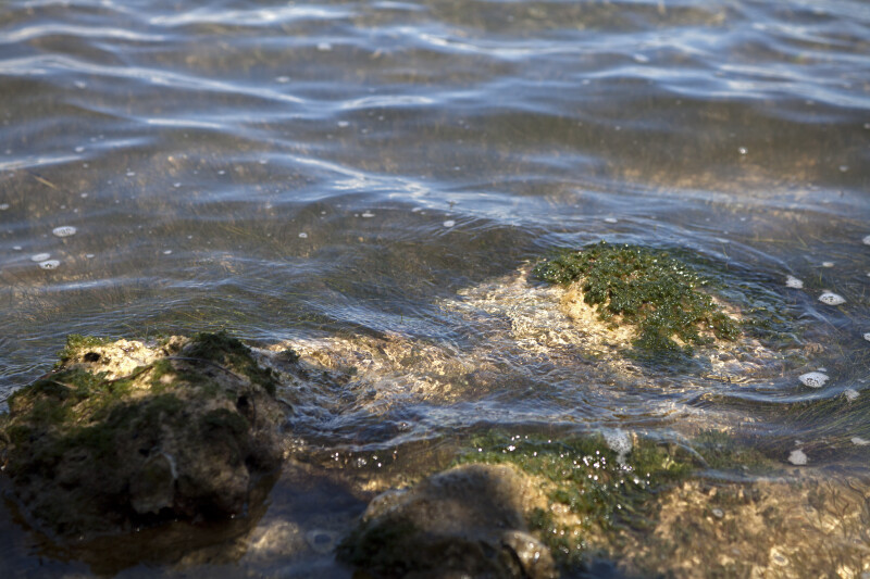 Algae-Covered Rocks Slightly Above the Water's Surface