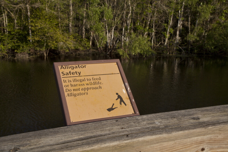 Alligator Safety Sign at Big Cypress National Preserve