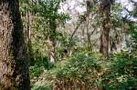 Along the Fort Caroline Nature Trail