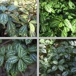 Aluminum Plants photographs