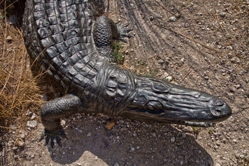 American Alligator Sculpture
