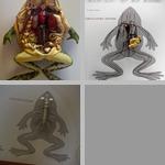 Amphibian Anatomy photographs