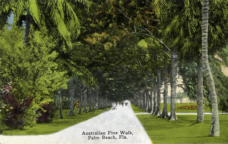 An Australian Pine Walk