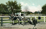 An Ostrich Farm in Jacksonville, Florida
