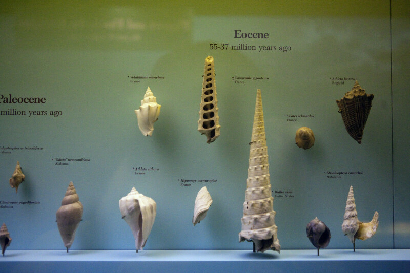 Ancient Mollusc Shells from Paleocene and Eocene Epochs
