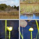 Anhinga Trail photographs