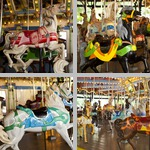Animal Amusement Park Rides photographs
