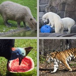 Animal Behaviors photographs