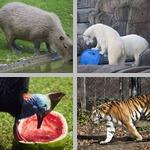 Animal Behaviors photographs