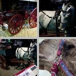 Animal Equipment photographs