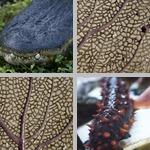 Animal Patterns photographs