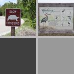 Animal Signs photographs