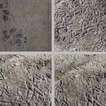 Animal Tracks and Sign photographs