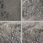 Animal Tracks and Signs photographs