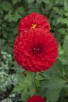 """""""Anke Huber"""" Flower"""