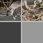 Antlers photographs