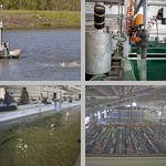 Aquaculture Farms photographs