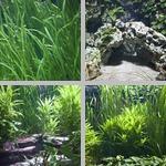 Aquarium photographs