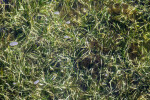 Aquatic Grass at Biscayne National Park