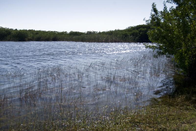 Aquatic Grass