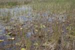 Aquatic Plants and Grasses