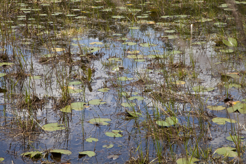 Aquatic Plants on May's Prairie