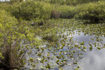 Aquatic Plants, Shrubs, and Water at Anhinga Trail of Everglades National Park