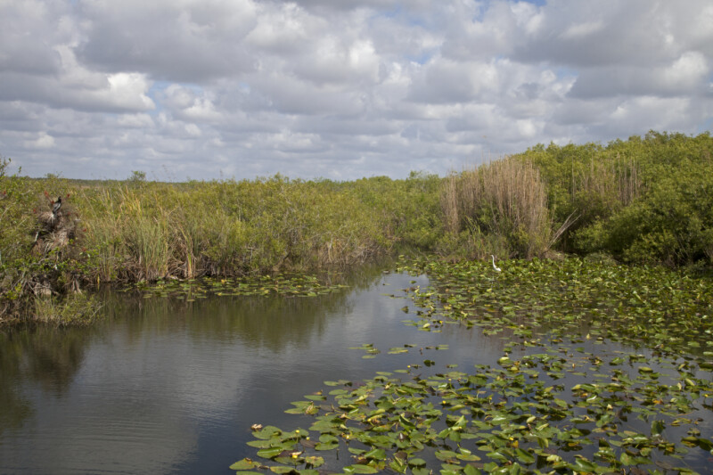 Aquatic Plants, Water, Shrubs, and Grasses at Anhinga Trail of Everglades National Park