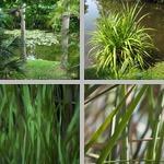 Aquatic Plants photographs