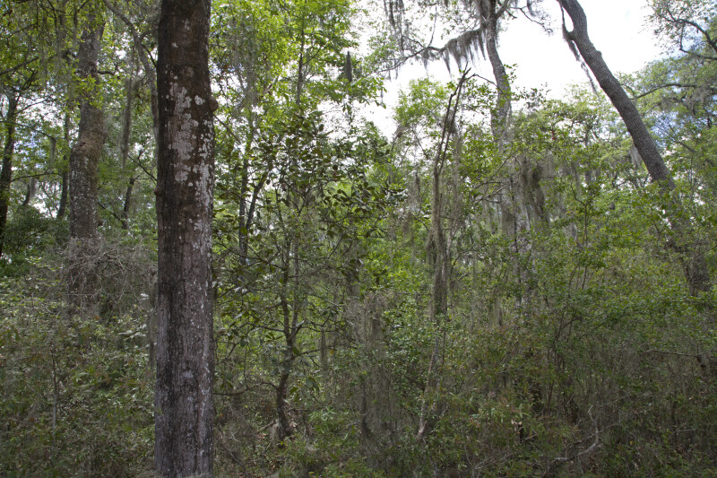 Area Heavily Covered with Trees and Shrubs