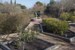 Area with a Variety of Small Shrubs at the San Antonio Botanical Garden