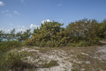Area with Sand, Grass, and Shrubs at Biscayne National Park