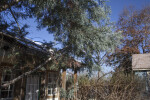 Arizona Cypress Trees Over a House