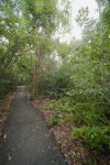 "Asphalt Path Called ""Gumbo Limbo Trail"""