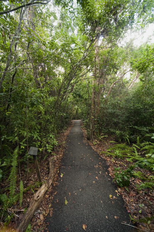 Asphalt Path Known as Gumbo Limbo Trail