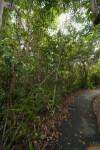 Asphalt Sidewalk Running through Vegetation