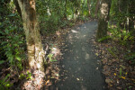 Asphalt Trail at Everglades National Park