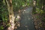 Asphalt Trail at Everglades National Park