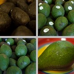 Avocados photographs