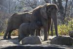 Baby Elephant and Herd