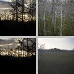 Bald Cypress Trees photographs
