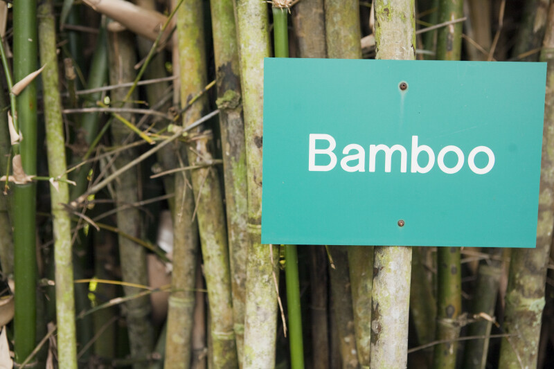 Bamboo and Sign
