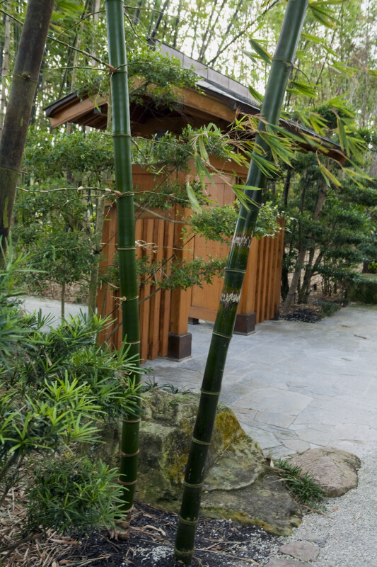 Bamboo by Gate