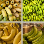 Bananas photographs