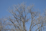 Bare Branches Against a Light-Blue Sky