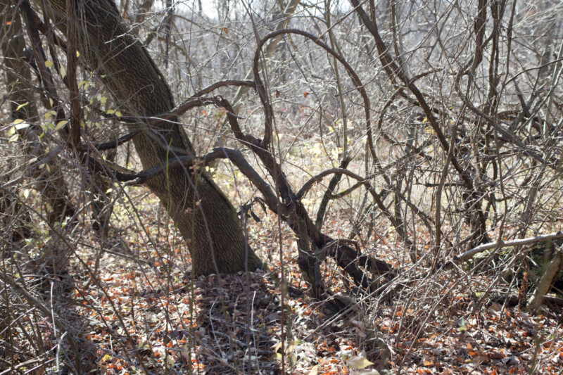 Bare Branches of Various Trees and Shrubs