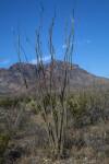 Bare Desert Shrub and Mountain