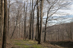 Bare Trees along the Trail