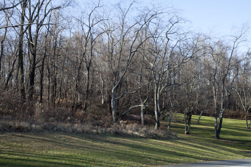 Bare Trees Growing in Grassy Area at Boyce Park
